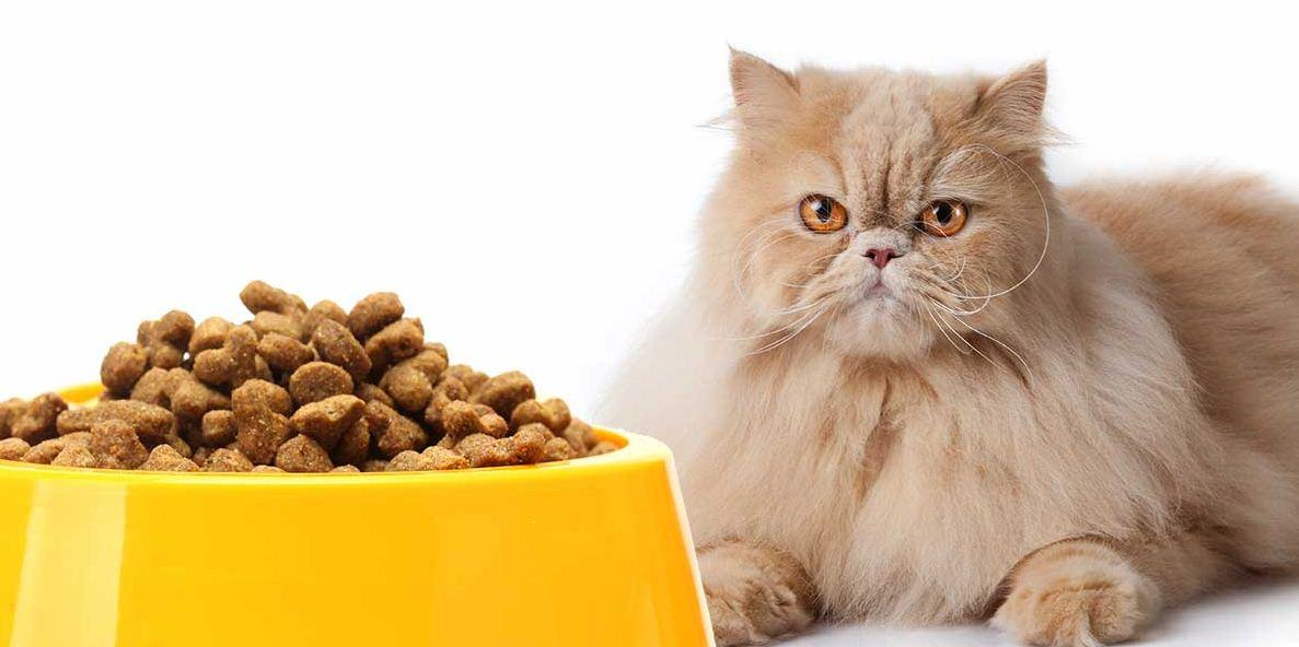 makanan kucing persia
