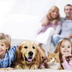 Tips Memilih Penyedia Pakan Berkualitas Untuk Hewan Peliharaan Anda